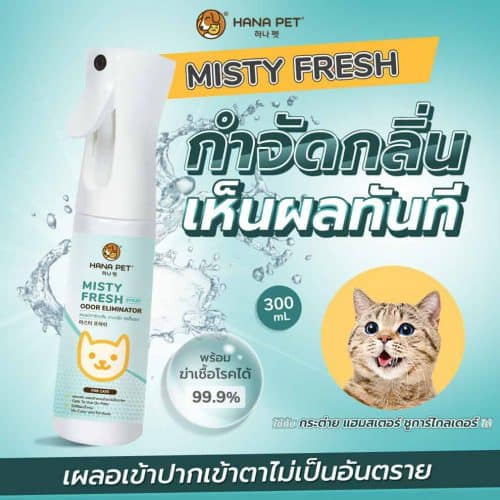 Misty Fresh Cat